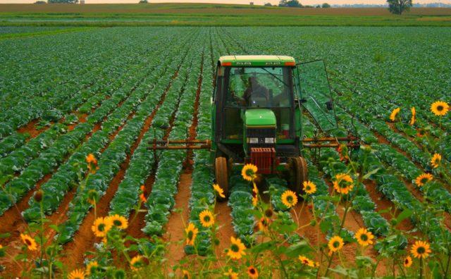 disoccupzione agricola